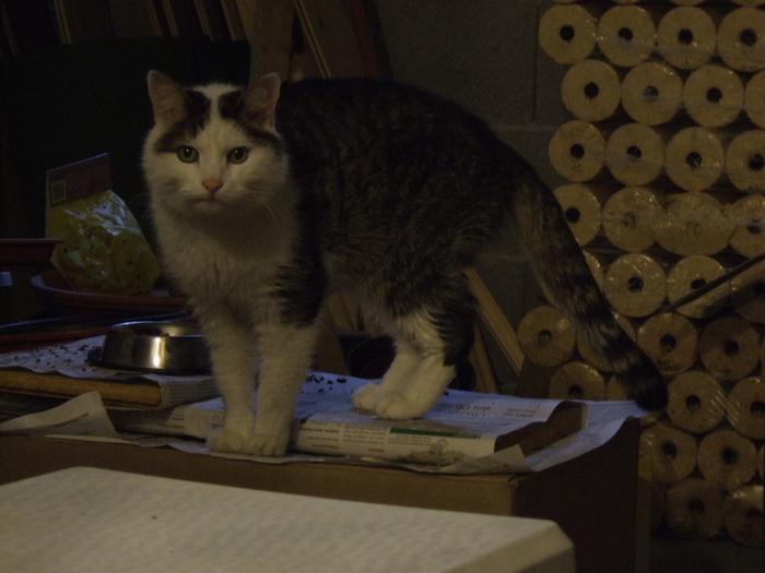 catman's last picture