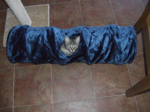 cats tunnel